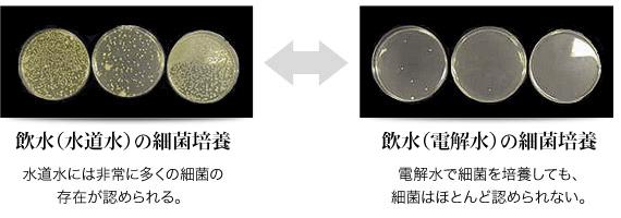 細菌培養比較